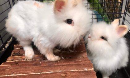 Salvati cinque coniglietti abbandonati in un parcheggio