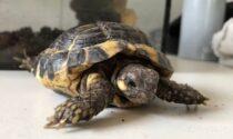 Al rifugio Enpa la nuova emergenza sono le tartarughe