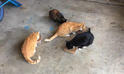 Triste epilogo per la colonia felina, in pochi giorni tutti i mici sono stati investiti