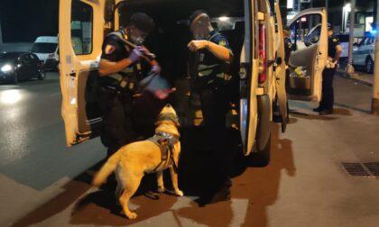 Nella movida e sulle arterie stradali con Spidi, il cane antidroga