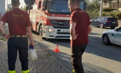 "Vespe ""arrabbiate"" pungono i passanti: nido rimosso dai pompieri"