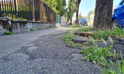Villasanta, cade sul marciapiede per una radice e lancia un appello al sindaco