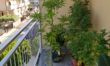 Marijuana coltivata sul terrazzo: arrestati due ventenni