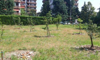 A Monza nasce il primo frutteto sociale