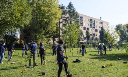 Monza, 500 nuovi alberi piantati in un solo giorno