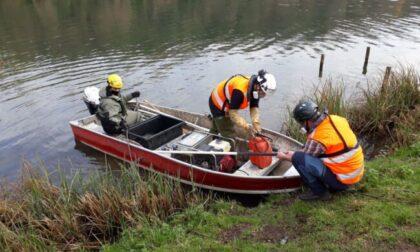 Partita la caccia ai pesci siluro nell'Adda