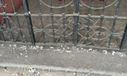 Escrementi di piccioni al cimitero, presto le pulizie straordinarie